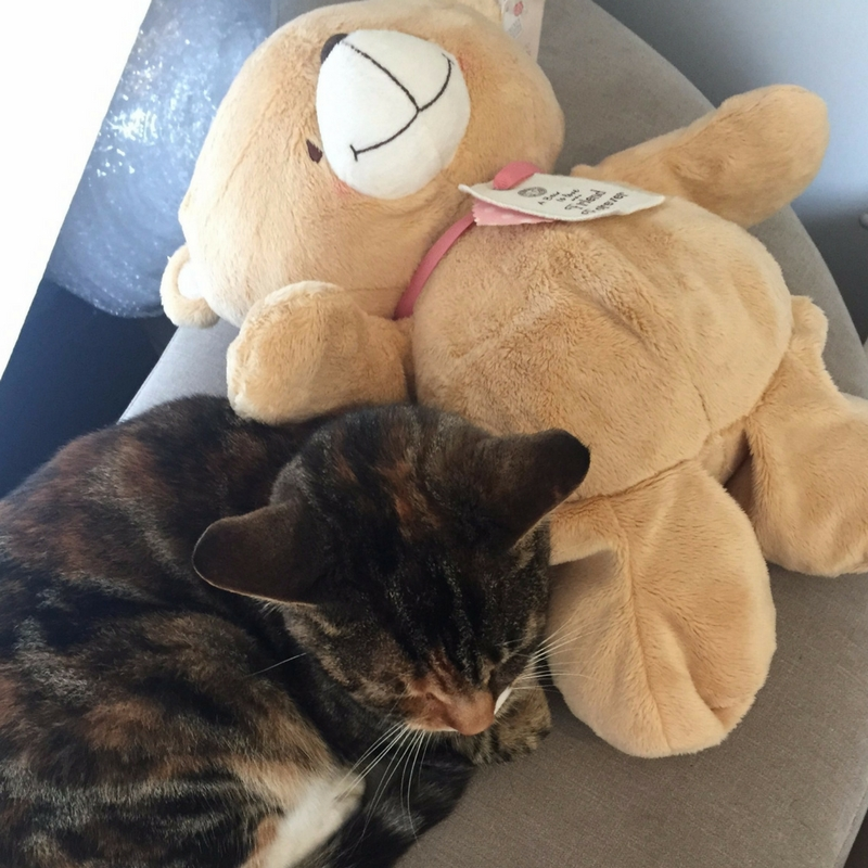 tabs-and-bear